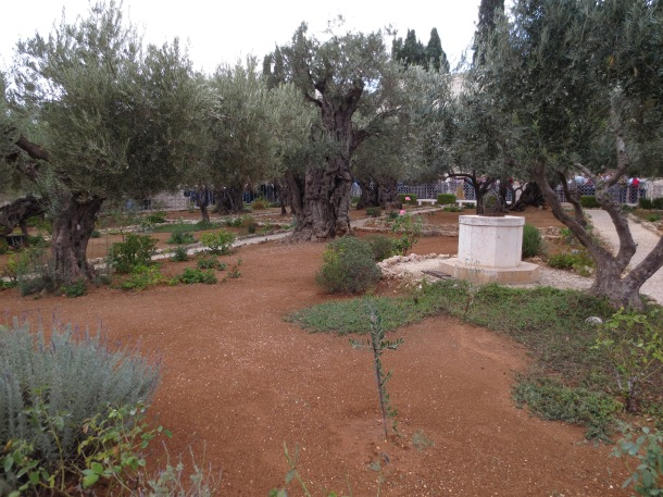 The Garden of Gethsemene, at the base of theMt. of Olives, where Jesus prayed on Thursday night with his disciples (and where they fell asleep). This is also where Judas kissed Jesus in betrayal.